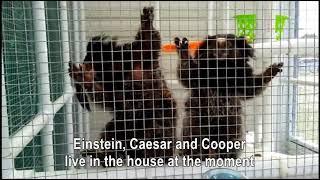 Tour of the monkey house
