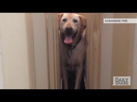 Watch Dog Stuck In Shipping Containers