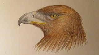 Cómo dibujar un águila con lápices de colores, dibujos de aves