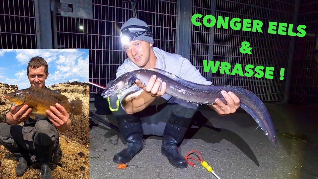 CONGER EEL & WRASSE FISHING - Big Baits ! Fishing For Conger Eels !