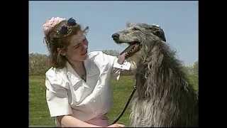 Scottish Deerhound  AKC Dog Breed Series