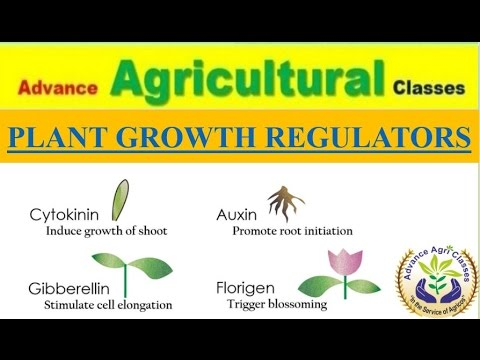 Plant Growth Regulators (Hindi/English) Agricultural Field Officer IBPS