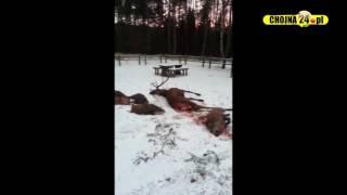 Martwe zwierzęta na leśnym parkingu przerwały rodzinny piknik [chojna24.pl]
