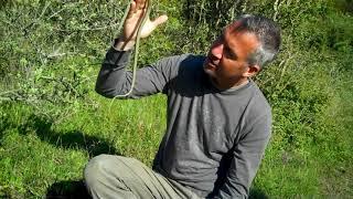 Grass Snake - 60 Second Species