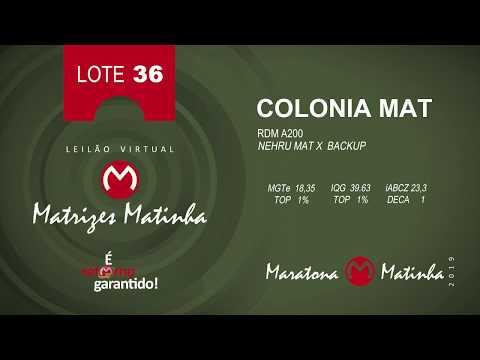 LOTE 36 Matrizes Matinha 2019