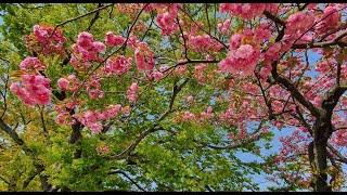 4월의 봄날 - 만경강 상류 봉동천(봉동읍 상장기 공원…