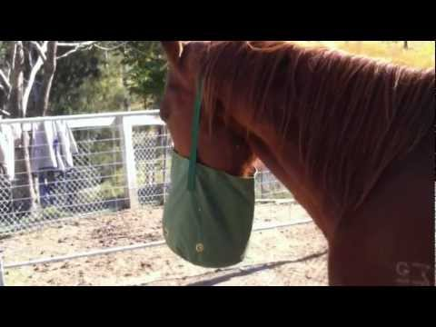 Horse Feed Nose Bag
