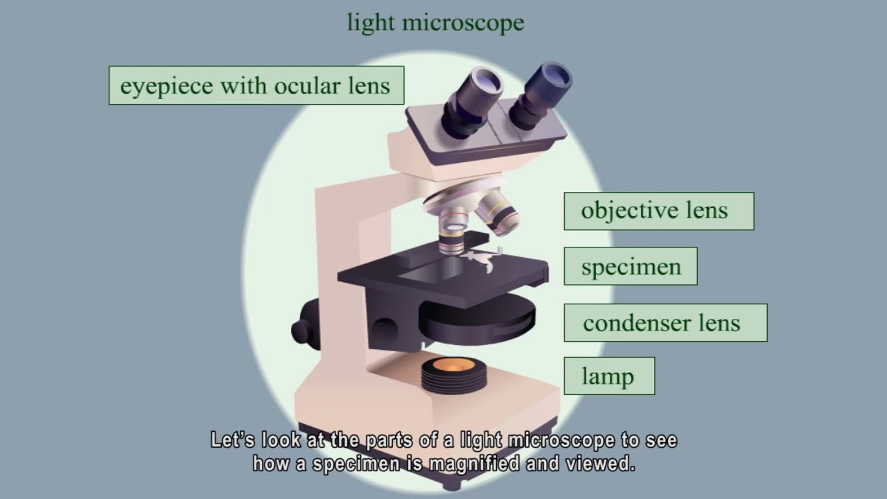 different parts of a light microscope
