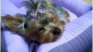 Домик для собак своими руками(Смотрите больше - http://portnoyy.justclick.ru/ - Cамый подробный и легкий в освоении ВИДЕО КУРС кройки и шитья для начинаю..., 2013-06-15T10:43:35.000Z)