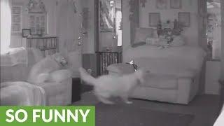 Dog goes insane after owner leaves home
