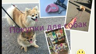 Покупки для собак из зоомагазина