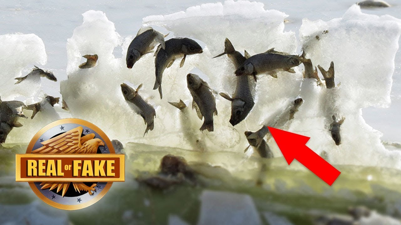 Fish Frozen Alive In Ice Wave Real Or Fake Youtube