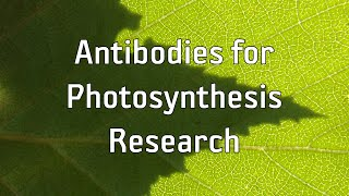 Agrisera Antibodies for Photosynthesis Research