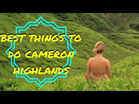 BEST THINGS TO DO, CAMERON HIGHLANDS | MALAYSIA TRAVEL VLOG