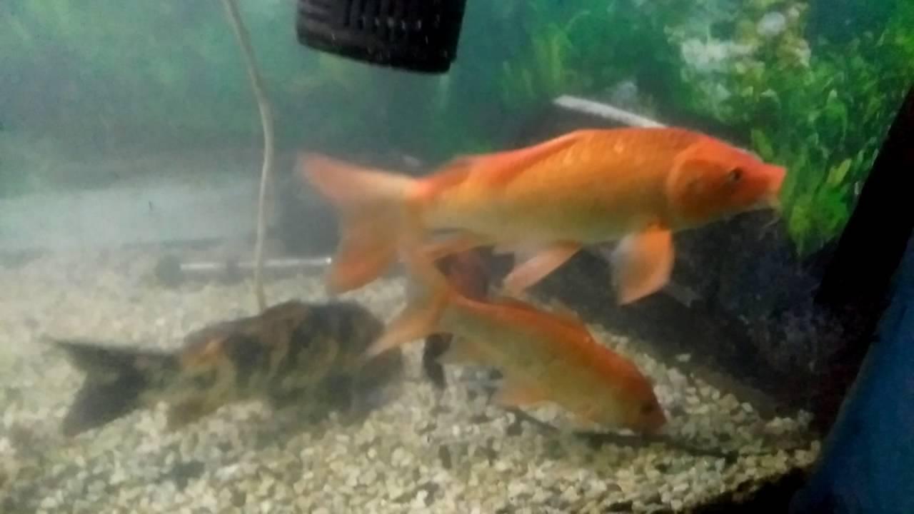 Fish aquarium tarapur - Ranchi Machhli Ghar