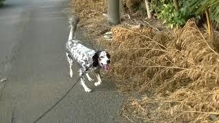 お泊まり犬は、朝夕たっつぷりお散歩をしてから、 朝食・夕食になります...