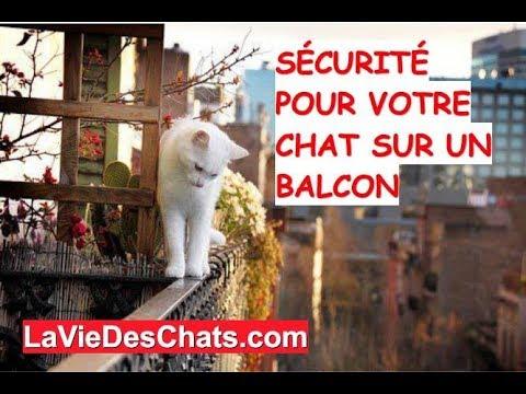 Sécurité Pour Votre 🐱 Chat Sur Un Balcon
