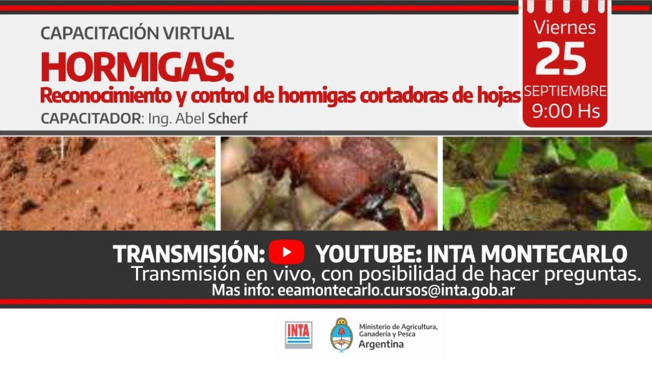 Download HORMIGAS: Reconocimiento de hormigas cortadoras de hojas.