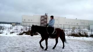 Обучение верховой езде на лошади. Horseback riding lessons on the horse