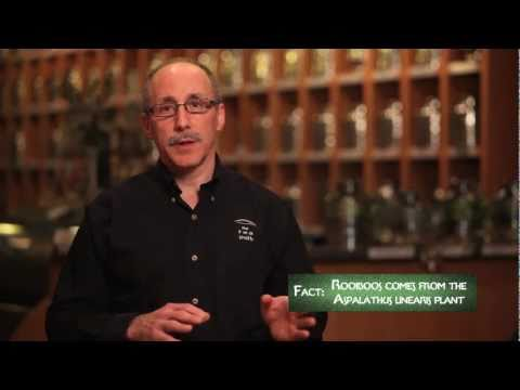 """Introduction to Rooibos Tea, by The Chief Leaf, Tim Smith of """"TheTeaSmith.com"""""""
