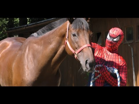 Real Spiderman rides a horse