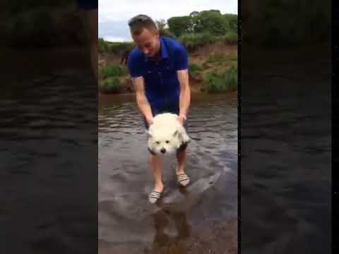 Little Dog thinks She's Swimming Over Water