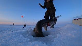 Огромные щуки на жерлицы в Якутии - 2 часть! Fishing pike Yakutia