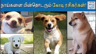 millions-fans-for-dogs-insta-accounts-instagram-famous-dogs-top-dog-insta-accounts-hindu-tamil-thisai