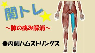 関節トレーニング(関トレ)JTAのセルフケアのやり方。膝の痛み解消、モモ裏(内側ハムストリングス)体操。