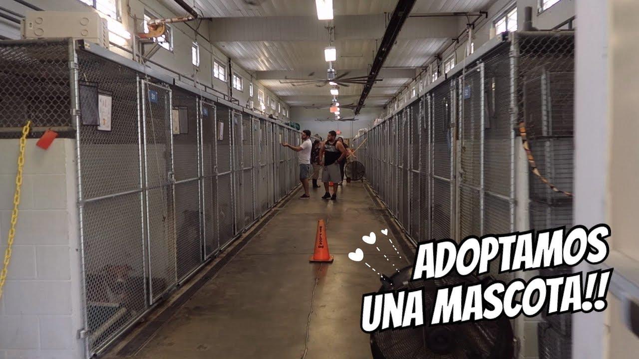 Download ADOPTAMOS UNA MASCOTA!