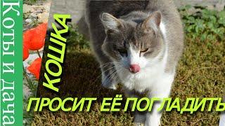 */*СМЕШНЫЕ КОШКИ*/* КОШКА ПРОСИТ ЕЁ ПОГЛАДИТЬ */*FUNNY CATS*/* THE CAT ASKS TO BE PET*/*
