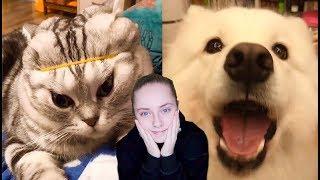 САМОЕ МИЛОЕ ВИДЕО В МИРЕ  ПОПРОБУЙ НЕ УМИЛЯТЬСЯ ЧЕЛЛЕНДЖ  реакция на собак и кошек в тик ток