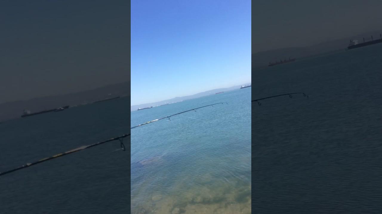 Sf Bay Striper Season 2017 Fishing Youtube