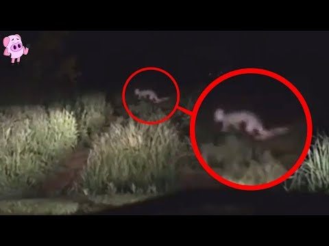 10 Creepiest Things Caught on Dashcam