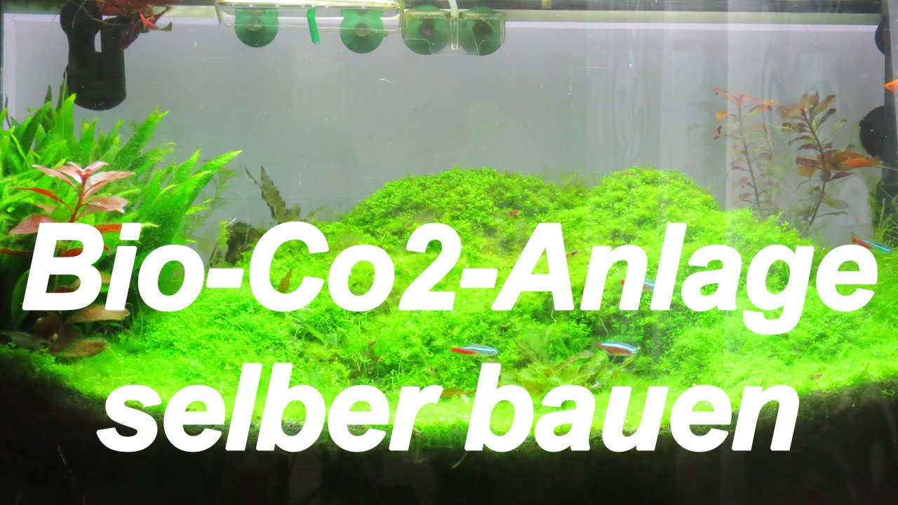 diy bio co2 anlage f r aquarien selberbauen 1 youtube. Black Bedroom Furniture Sets. Home Design Ideas