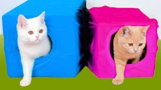 このビデオでは、あなたの猫にとって有益な10のアイデアを紹介します!...
