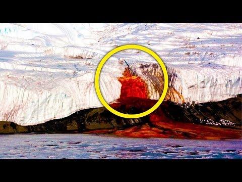 Антарктида под грифом