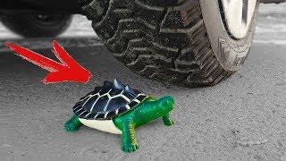EXPERIMENT: CAR VS TURTLE