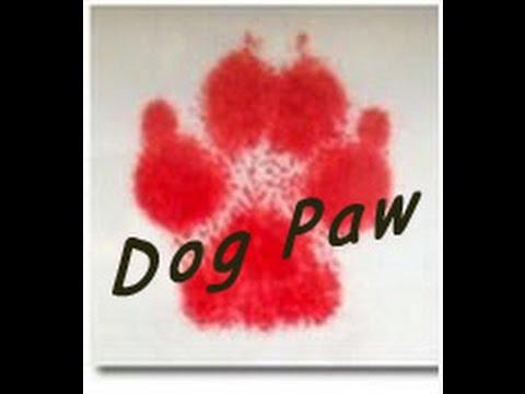 簡単!犬のかわいい足跡の記録方法| Dog Paw Print