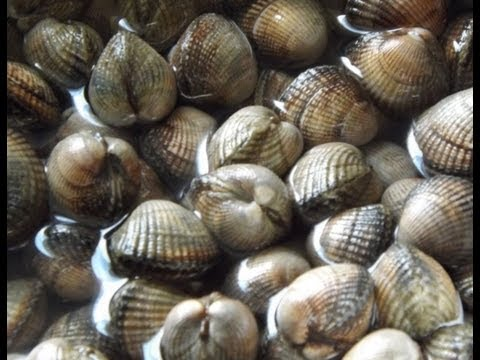 How To Cook Cockles,Fresh Penclawdd, Welsh Cockles.