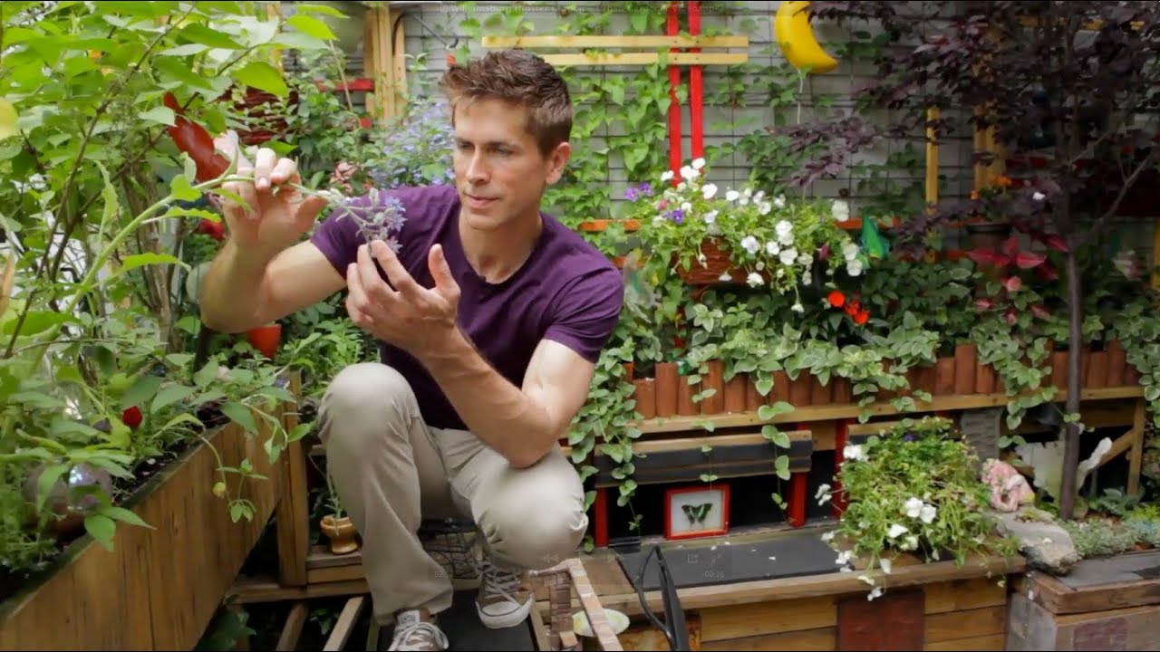 Tiny Williamsburg hipster garden Urban Gardener video YouTube