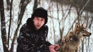 Дружба человека с волком
