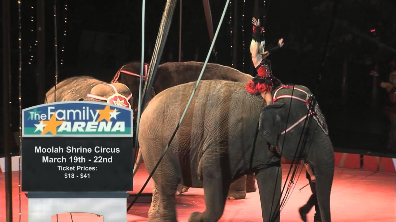 cotton candy Elephants clowns peanuts popcorn Final Performance Circus Performance