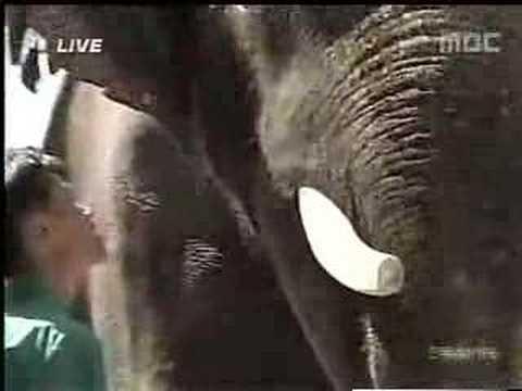 meet kaushik the talking elephant youtube