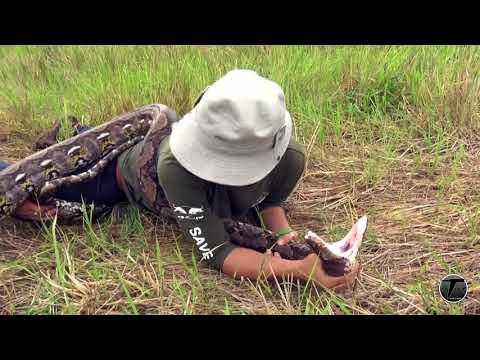 Nick WE 17.งูเหลือมรัดและวิธีป้องกันตัวหากคุณโดนรัด