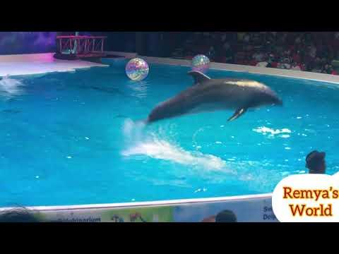 Dolphin show/Dolphin playing/Dubai dolphinarium/Best of the Dubai Dolphin show