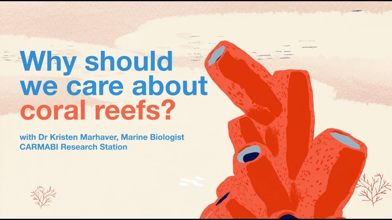 Why should we care about coral reefs?