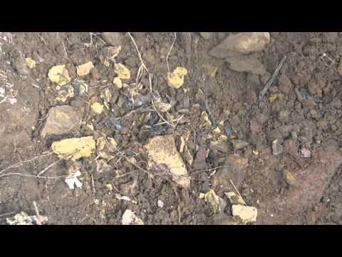 Huge Scorpions in my Agri Fields