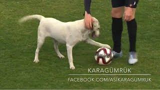 Canine interruption: How a dog brought a football match to a halt