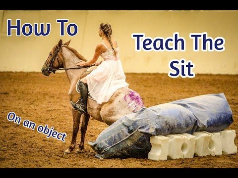 How to Teach Your Horse To Sit (On a beanbag in-hand)